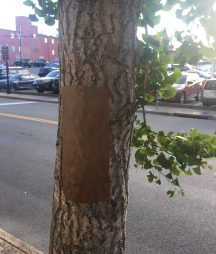 Wounded Tree